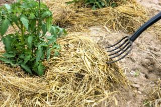 Avantage paillage plante