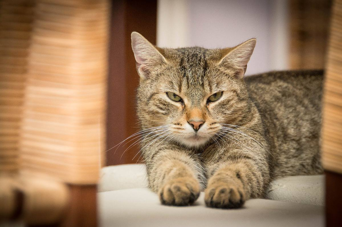 Laisser un Chat seul