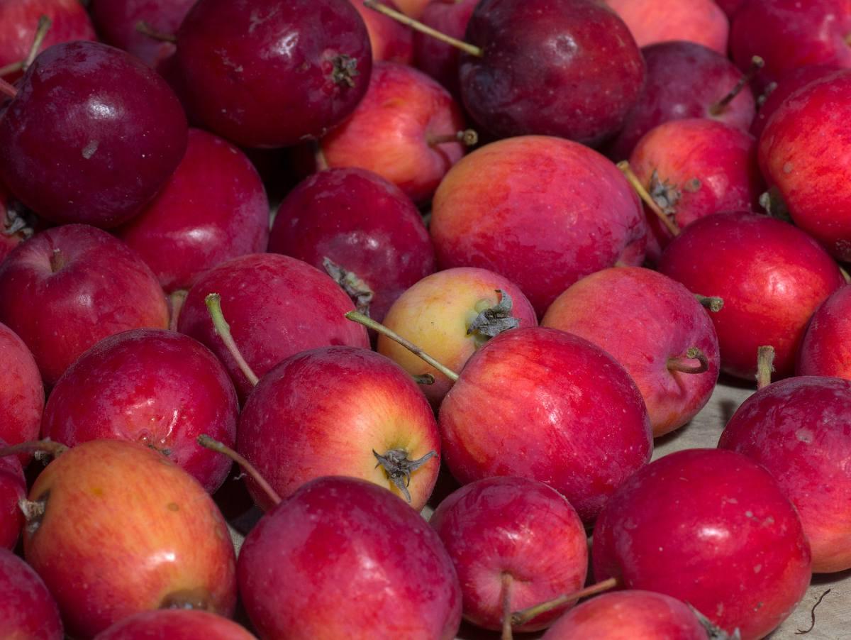 bien conserver les pommes
