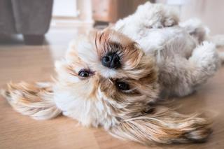 crise épilepsie chien