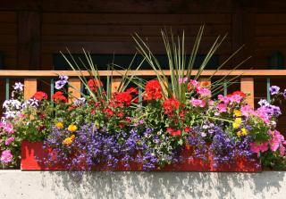 plante fleur jardiniere balcon soleil sud