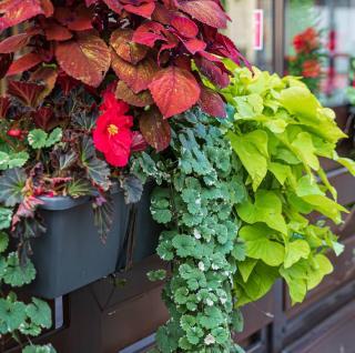 plante pour balcon terrasse nord