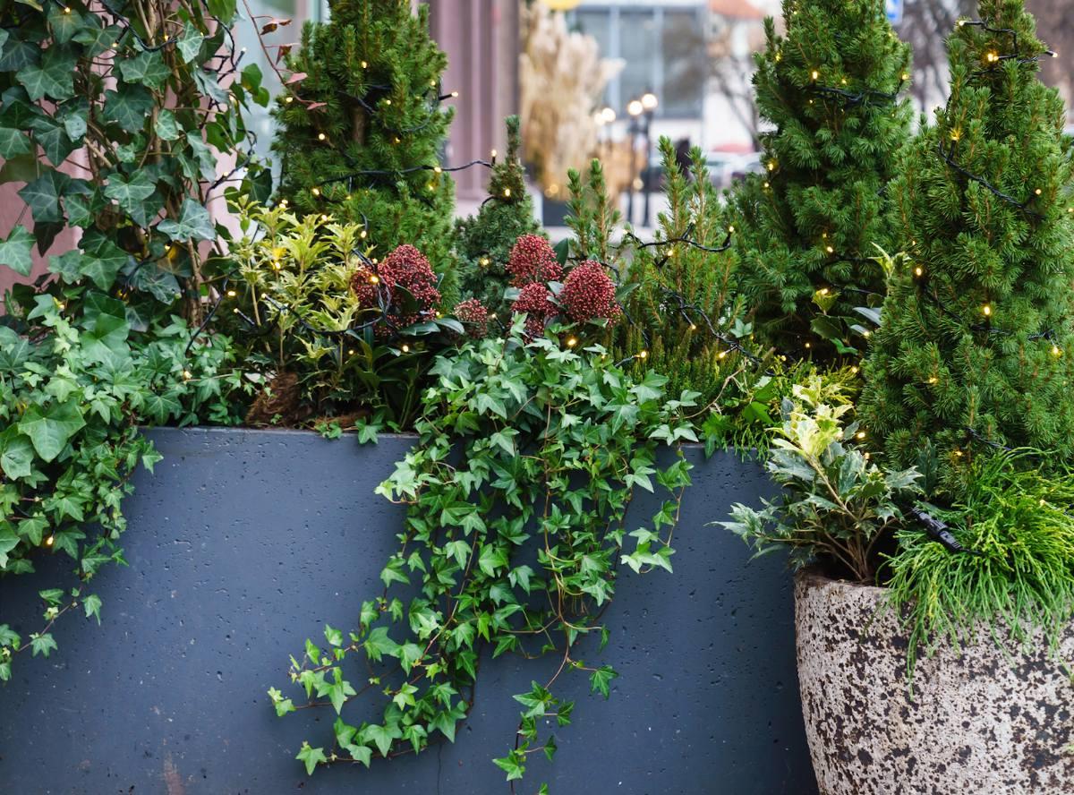 plantes pour balcon terrasse nord