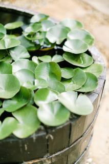 faire mini jardin aquatique bac bassine