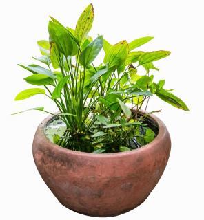 min jardin contenant plante aquatique eau