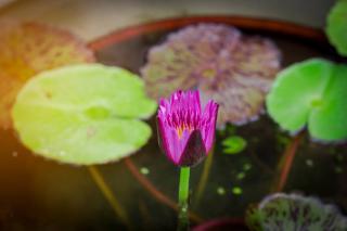 mini jardin aquatique