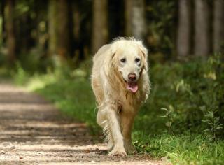 vieillesse chien age conseil promenade