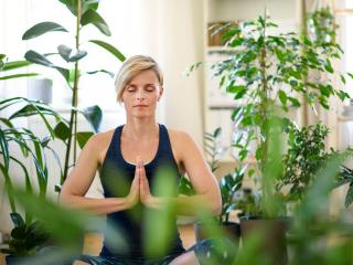 yoga plantes