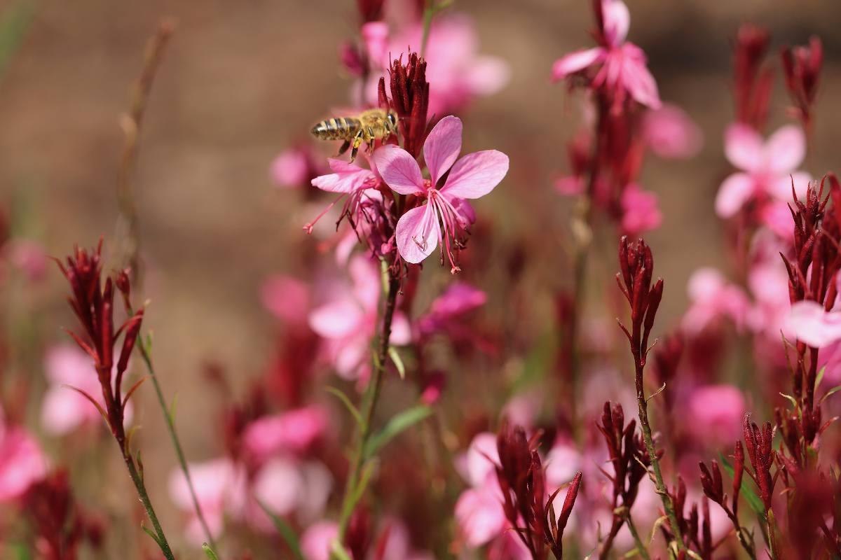 Plantes pour massif fleuri, facile d'entretien : 3 incontournables