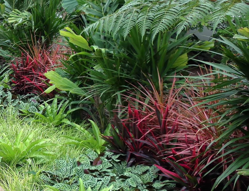 jardin coloré feuillage toute annee