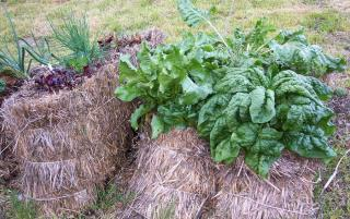 cultiver legume sur botte de paille conseil
