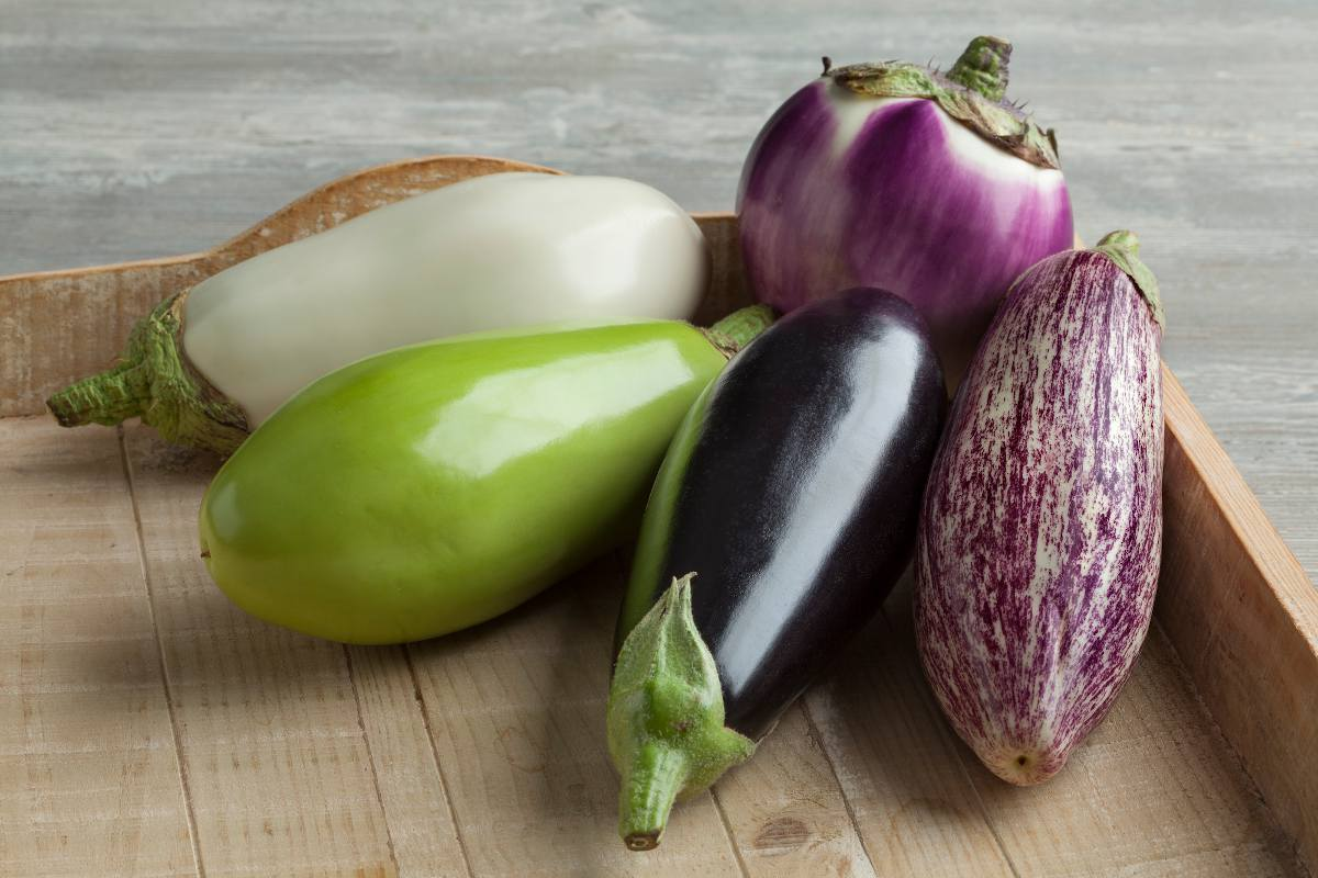 aubergine varietes