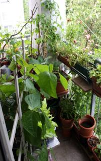 permaculture balcon terrasse