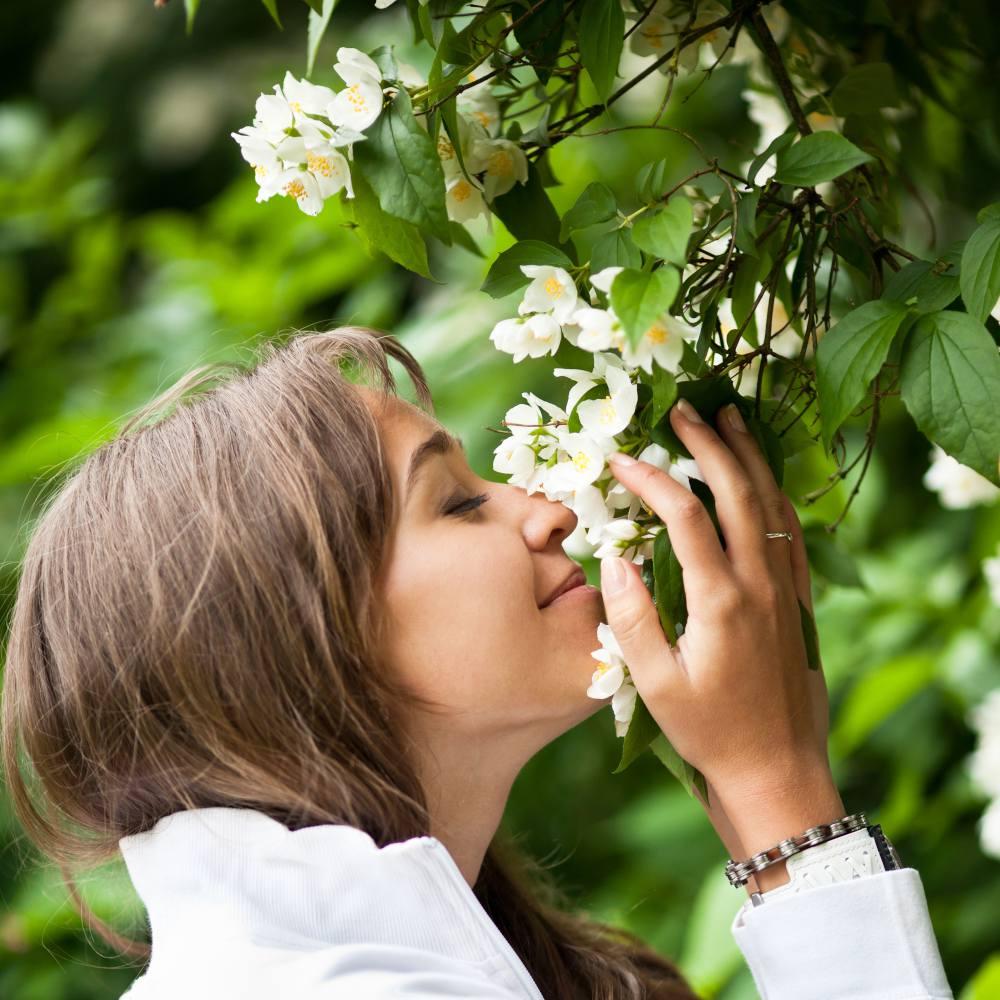 plante fleur parfume odeur