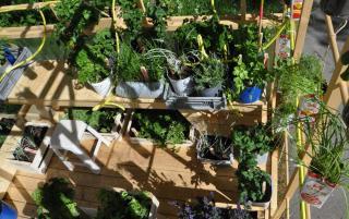 plantes pour permaculture ville balcon terrasse