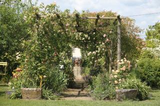 rosier pour jardin de charme authentique