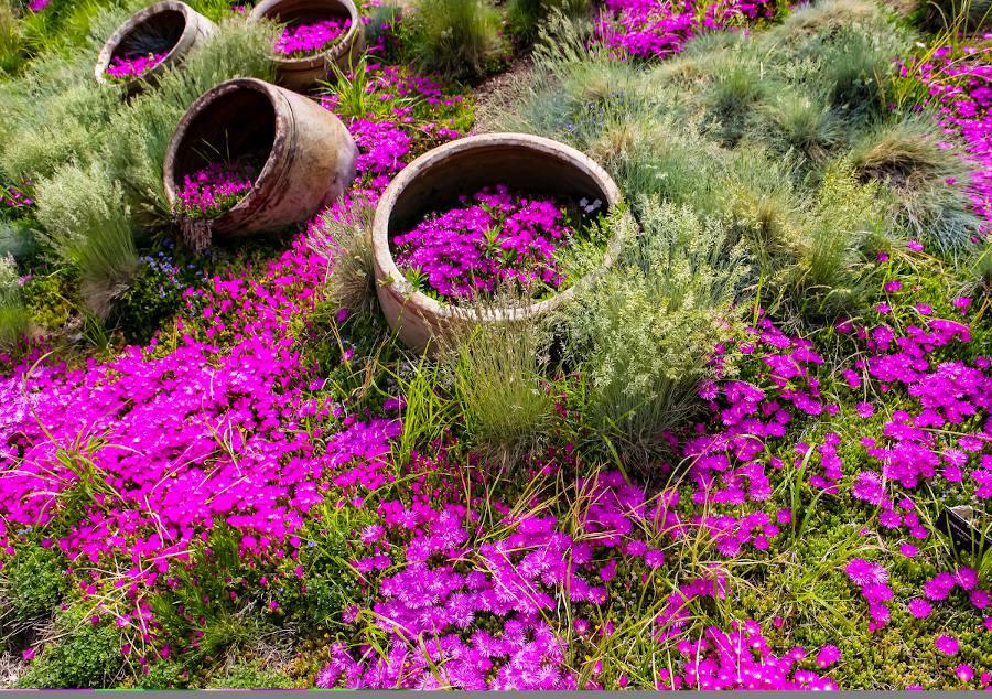 succulente coloré