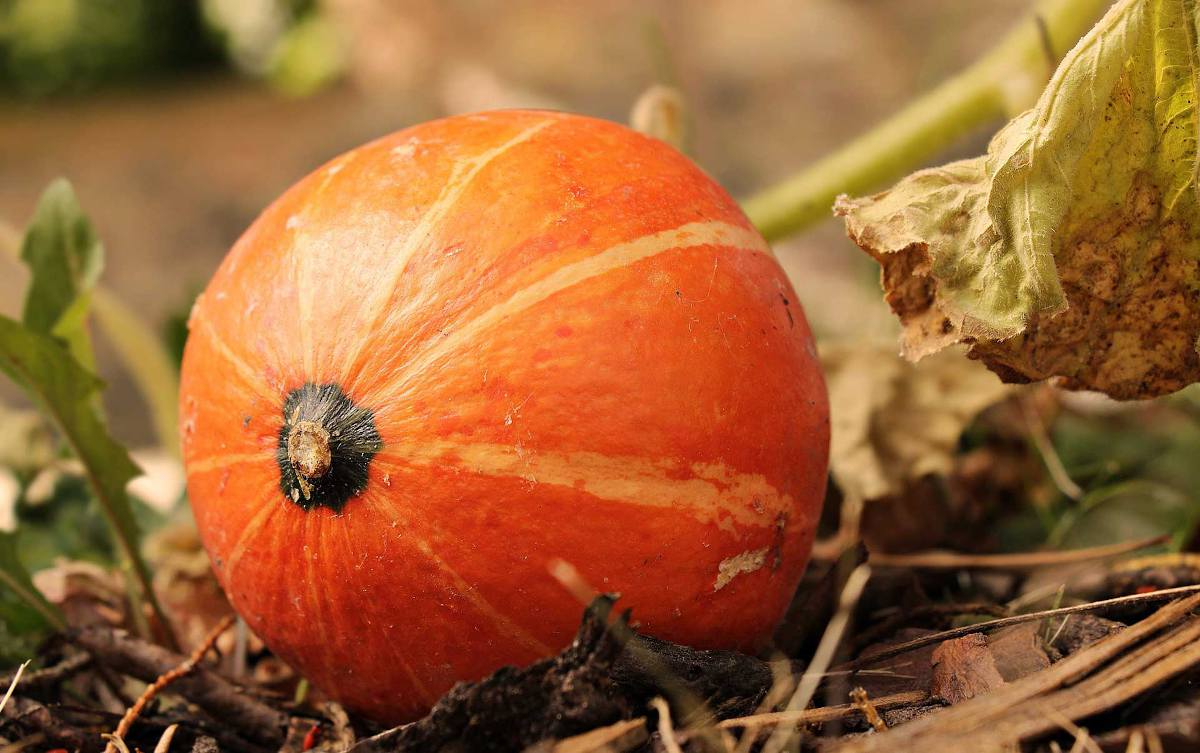 Permaculture automne