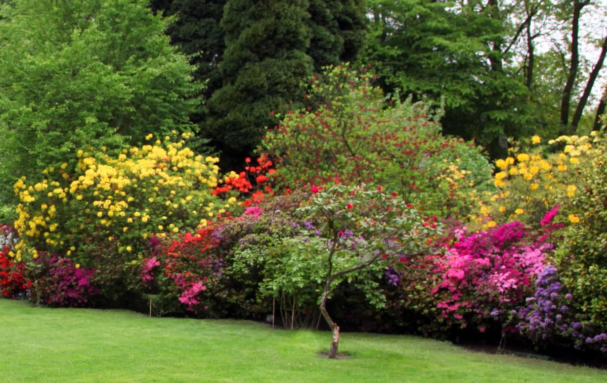 beaux arbustes a fleurs
