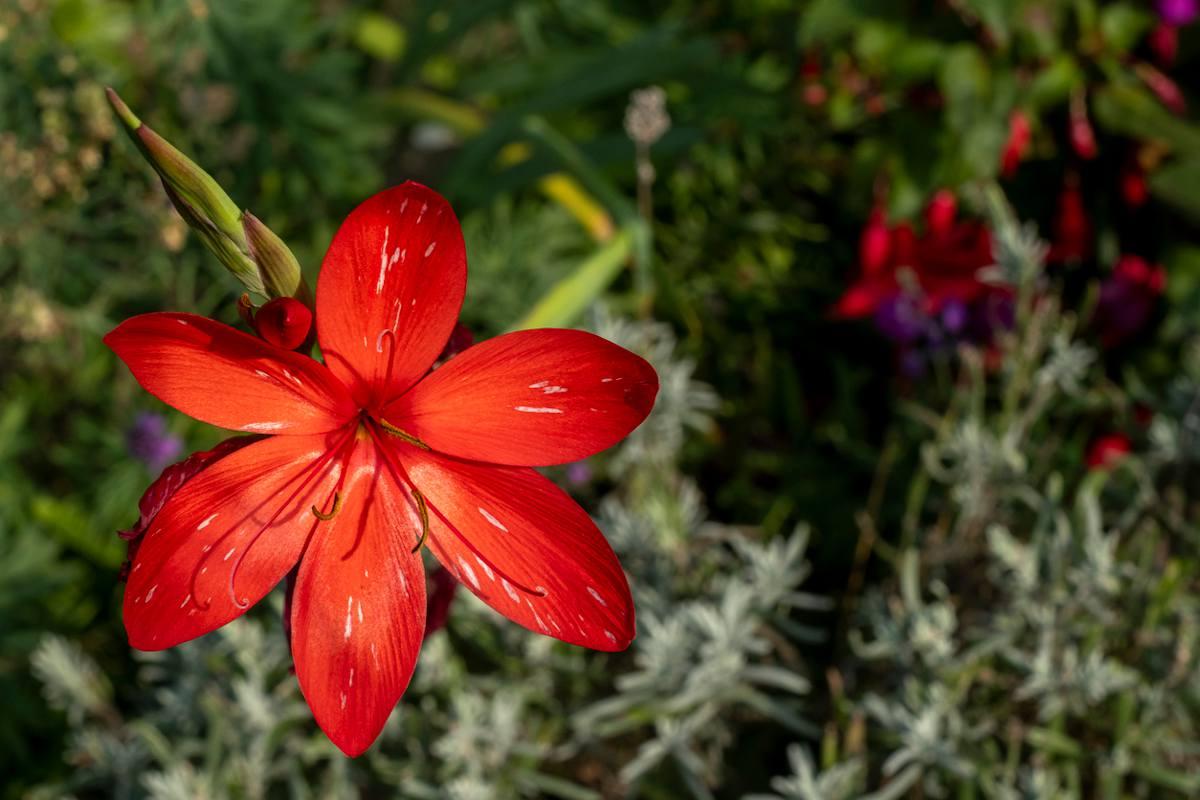 fleur massif automne