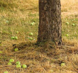 plantation automne permaculture