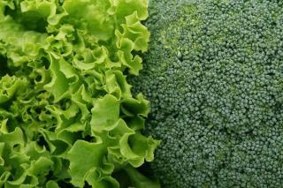 plantation legume aout