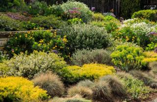 plante couvre sol croissance rapide
