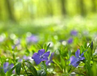 plante fleur qui pousse sous un arbre