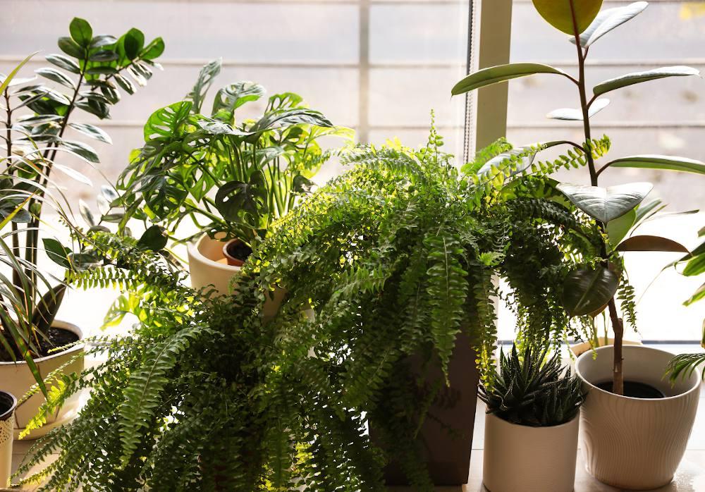 plante interieur facile entretien