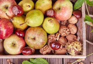 recolte conservation fruit automne