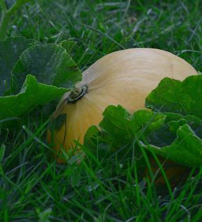 recolte legumes novembre
