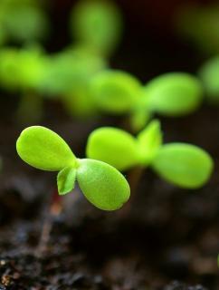 semis potager septembre