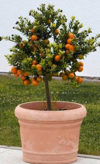 taille du pot pour arbre en pot