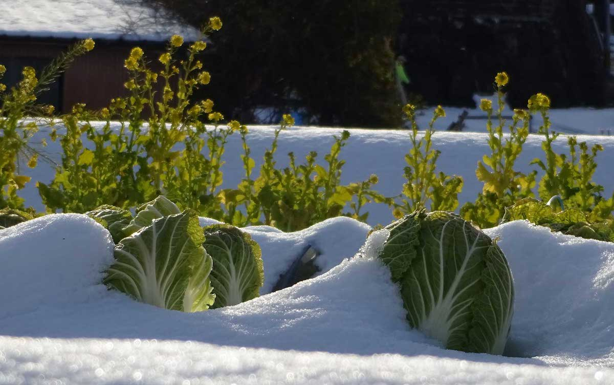 Permaculture hiver