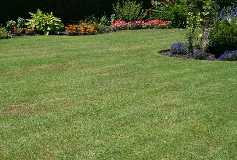 entretien renovation gazon pelouse conseils