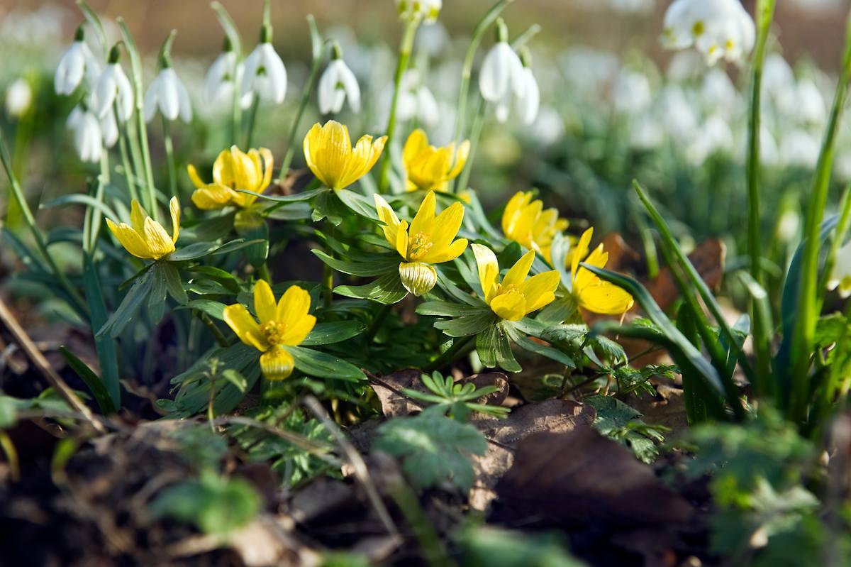 fleur a bulbe rocaille printemps