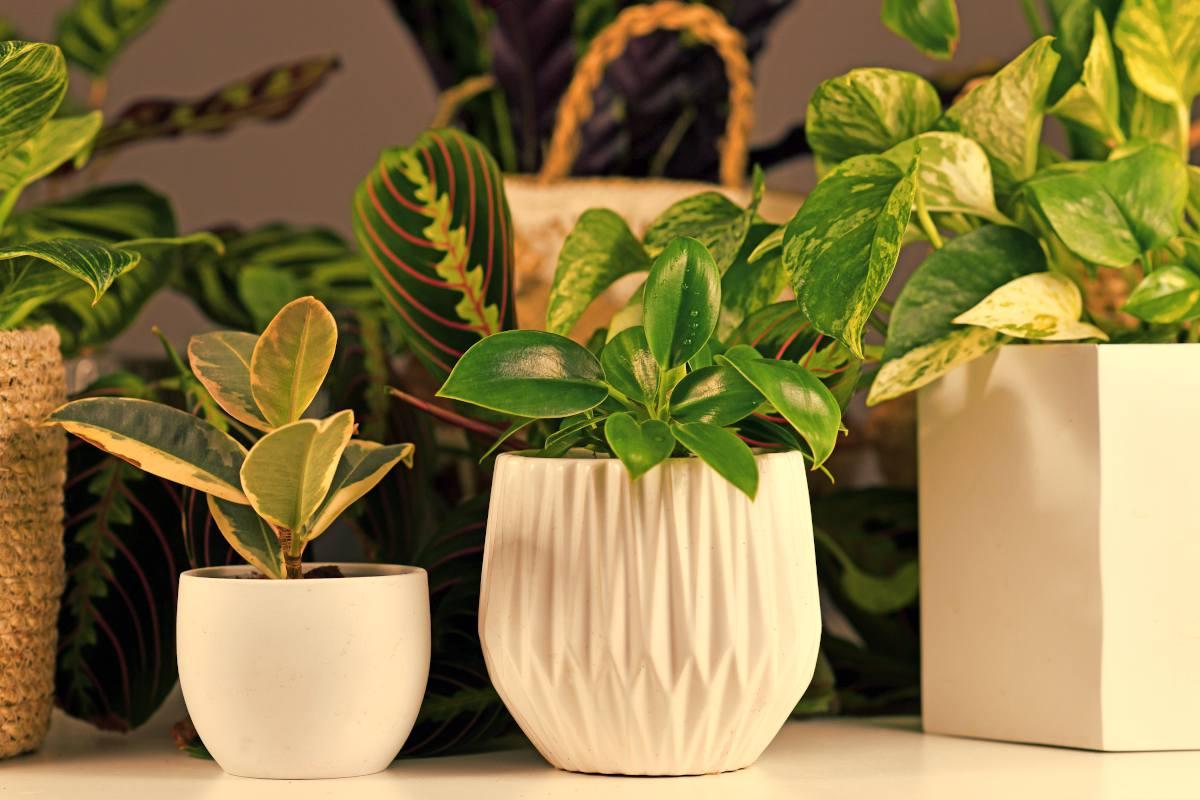 plante interieur faible lumiere luminosite