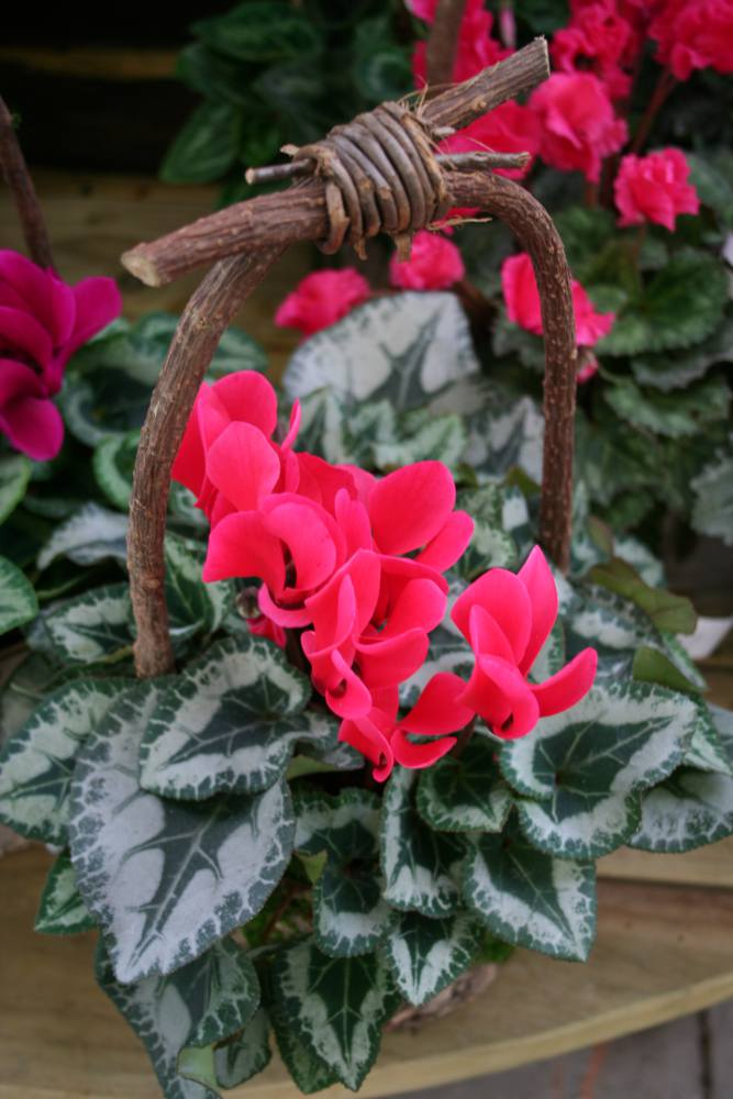 potee jardiniere balconniere automne