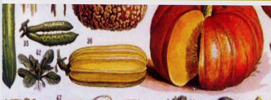 potager SA 18 1