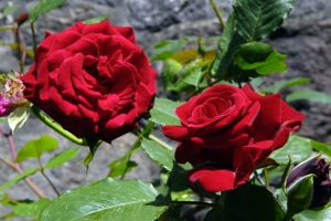red_parfum